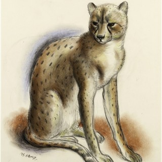 Patrick Ferguson Millard - Cheeta