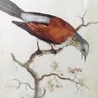 Antique Avian Print.