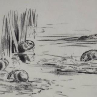 Eileen Soper - Water Voles