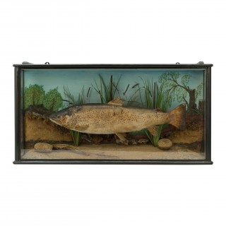 1930's Taxidermy Preserved Trout