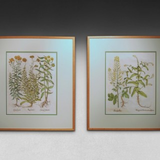 A pair of Besler Engravings, white mustard & Myagrum, and Ageratum.