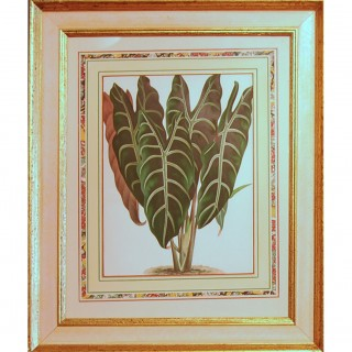 A set of four foliage botanical engravings from L'illustration Horticole.