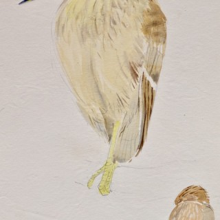 Eileen Soper - Night Heron - watercolour
