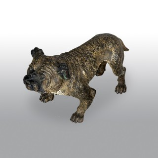 Franz Xaver Bergman Set of Four Cold Painted Bronzes of Bulldogs