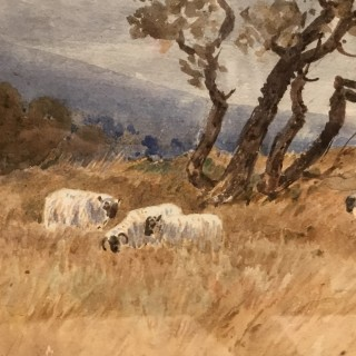 Charles Pigott Sheep Watercolour