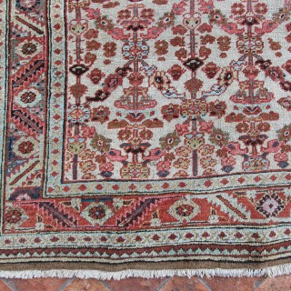 Rare ivory Antique Bakshaish rug, Persia