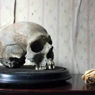 A Well Patinated 19thC Male Human Skull on Stand