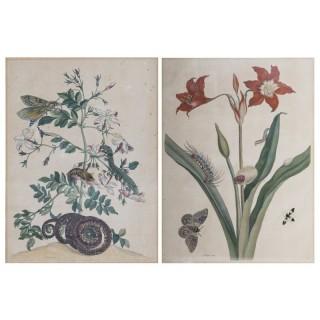 Pair of 18th Century Botanical Engravings