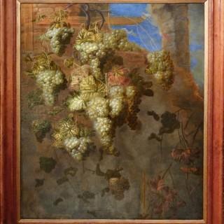 Vines amongst the Ruins