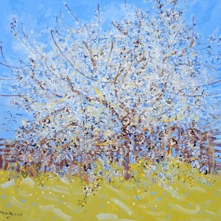 Spring Blossom at Les Pailles
