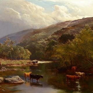 Cattle Watering in the River Lyn, North Devon