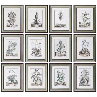 SET OF 12 COLOURED BOTANICAL PRINTS BY ABRAHAM MUNTING (1626-1683)