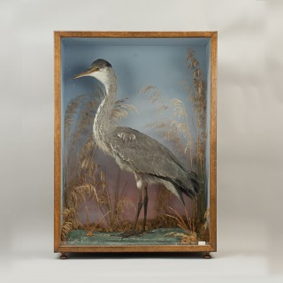 Vintage Century Taxidermy, Cased Heron