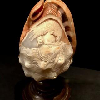 Cameo Shell Lamp