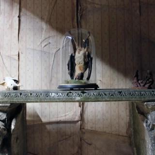 Good c.1900 Dome Cased Taxidermy Fruit Bat
