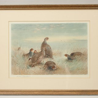 Partridge Shooting Print, a Frosty Dawn by Archibald Thorburn