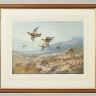 Antique Shooting Picture, Grouse Over the Moors by Archibald Thorburn