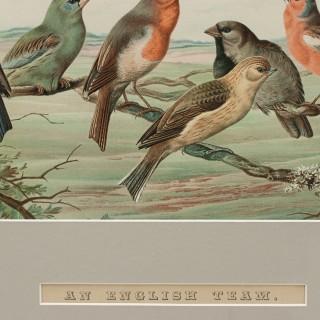 Pair of Cricket Prints, Harry Bright, an English Team & an Australian Eleven