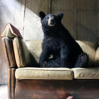 A Good Late 20thC Taxidermy Juvenile Black Bear