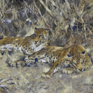 Indian Leopards by Arthur Wardle
