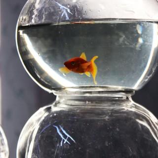 A Group of Seventeen Original 1960's Fairground Glass Goldfish Bowls