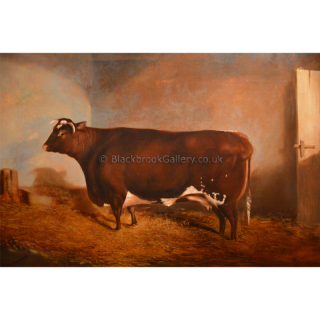 Shorthorn Cow In A Stable