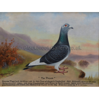 Portrait of 'The Prince' Racing Pigeon