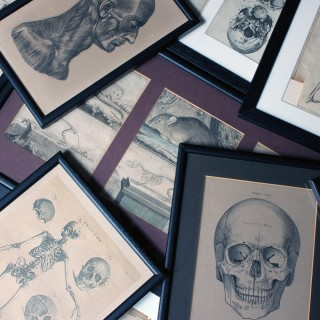 A Mixed Group of Twenty Framed 19thC Anatomical Engravings & Prints