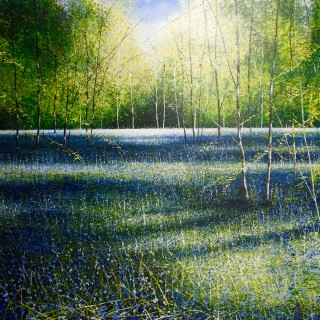 Light and Shadows in Bluebell Wood