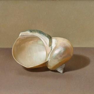'Shell' by Siân Hopkinson (born 1967)