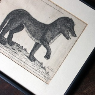 An 18thC Engraved Representation of the Wild Beast of Gévaudan by John Bayly c.1765