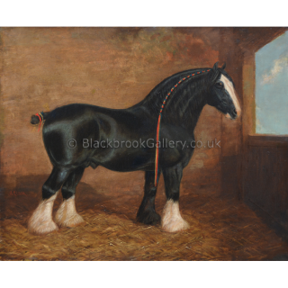 Shire Horse In A Stable