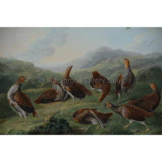 Covey of Partridges In A Landscape
