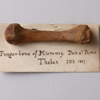 Ancient Egyptian Finger Bone of a Mummy attached to a Card Mount