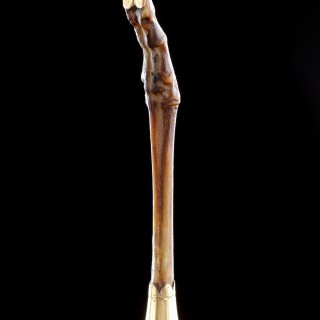 Gold Mounted Foreleg of a Miniature Southeast Asian Mouse-Deer