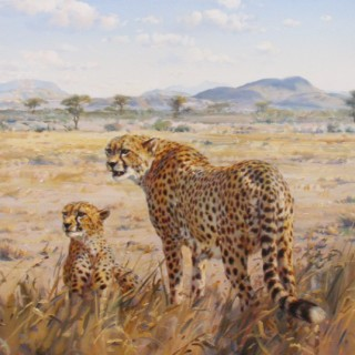 Two Cheetahs by Donald Currie Grant