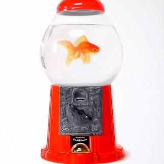 Gumball Goldfish
