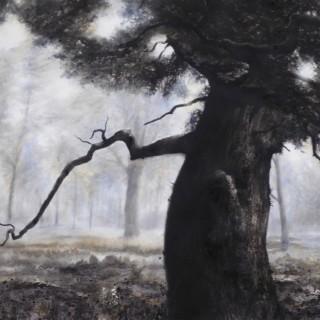 Blenheim Oak