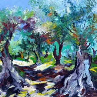 Morning lit Olive Trees