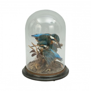 Vintage Taxidermy, Cased Pair Of Kingfishers