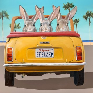 3 Rabbits in a Car