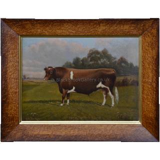 Guensey Bull