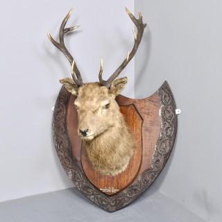 Taxidermist Deer Head